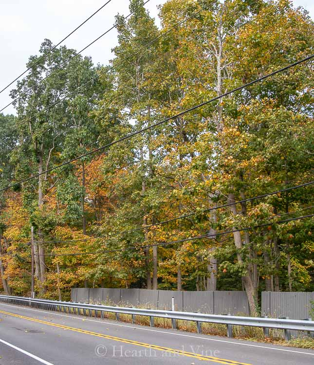 Peters township early fall foliage