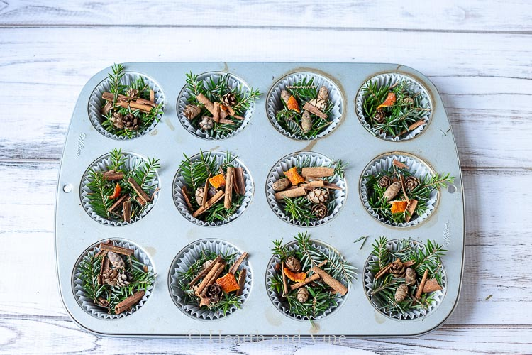 Muffin tin filled with pine, cinnamon sticks and orange peel