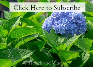 Blue hydrangea with subscribe text