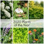 Gallery of some of the 2020 plants of the year