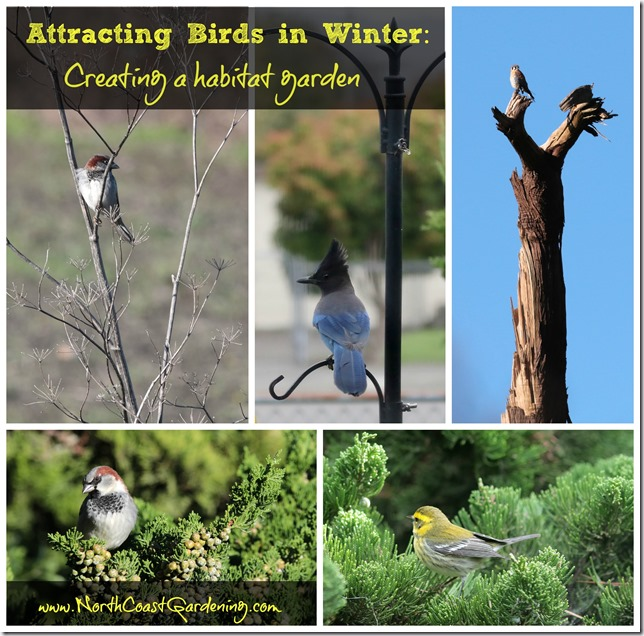 Attracting Birds In Winter: Creating Year-Round Habitat