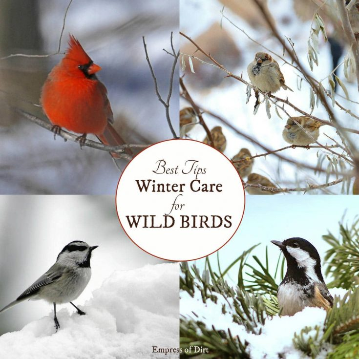 Love birds? Find Out How to Keep Them Coming Back to Your Garden All Winter Long