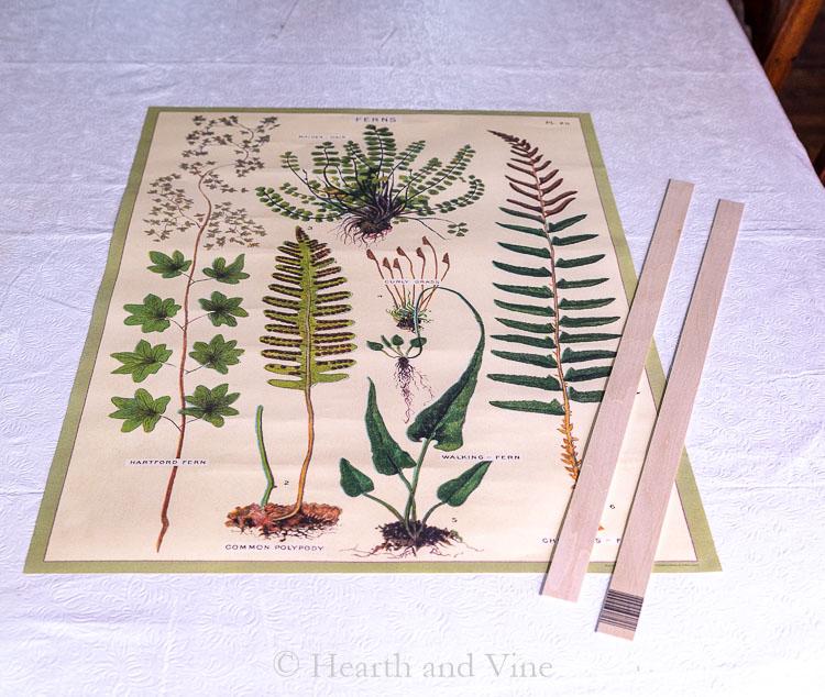 Fern poster and balsa wood sticks