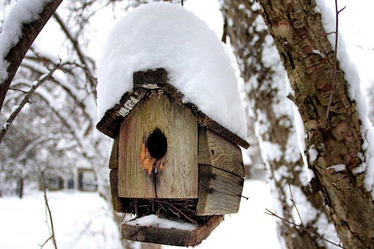 Get Your Bird House Ready for Winter