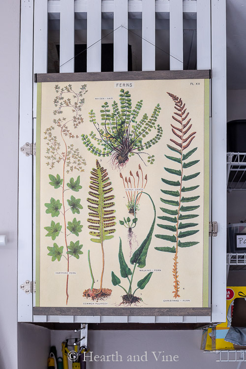 Hanging fern poster project.