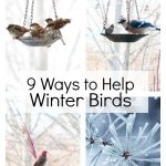Birds in the winter on trees and in feeders