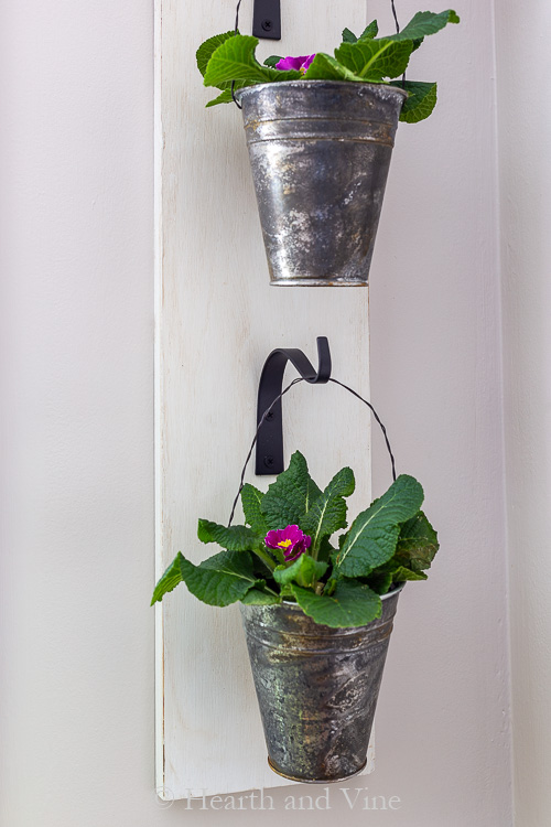 Primrose plants hanging in distressed pots on wall planter