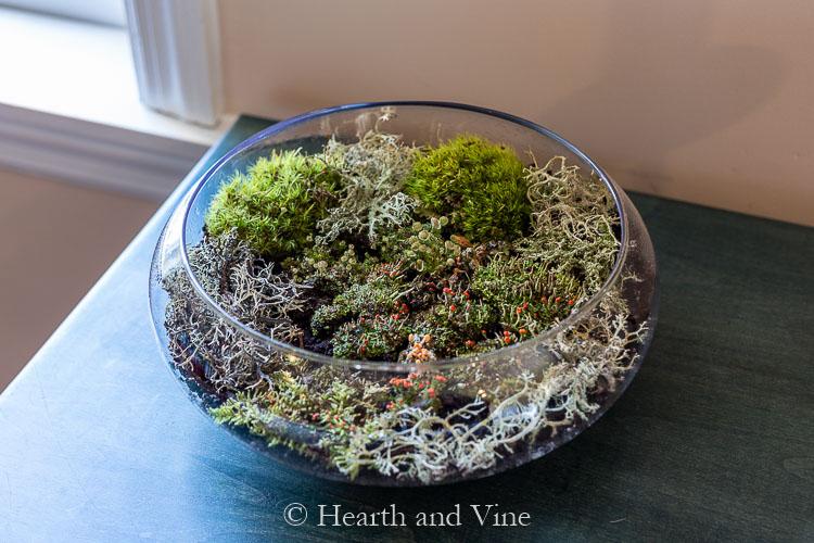 Indoor moss garden on blue table