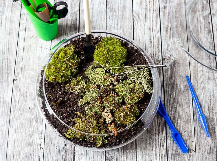 Placing moss into dish garden