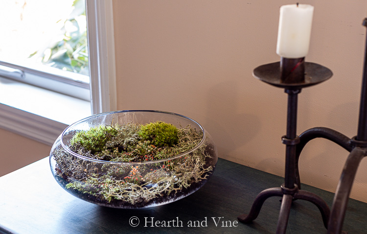 Moss terrarium on console table
