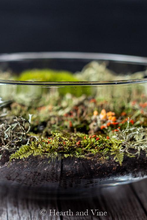 Side view of indoor moss garden