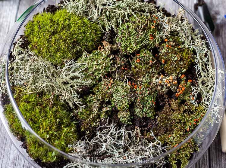 Tight view of indoor moss terrarium
