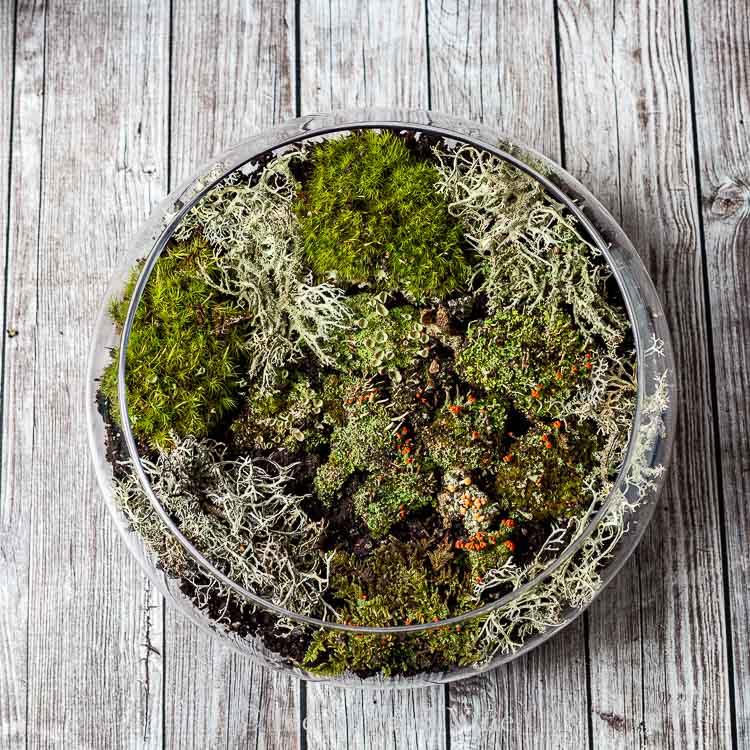 Indoor moss terrarium dish