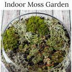 Indoor moss garden DIY