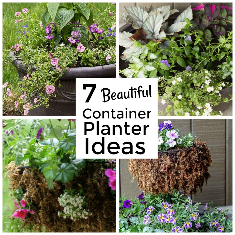 Container gardening collage