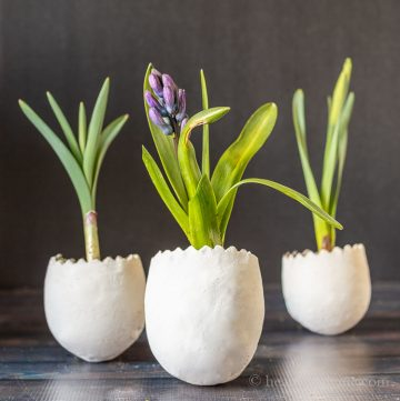Clay egg planters with live flowering bulbs