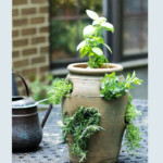 Herbs growing out of a strawberry pot.
