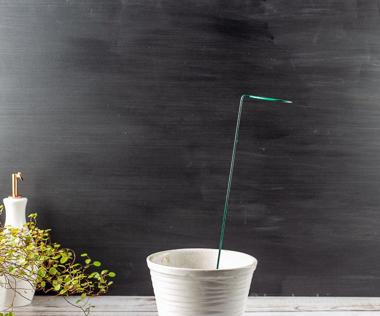Plant stake in a white pot.