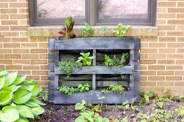 Pallet planter on brick wall in garden.