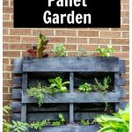 Gray painted wood pallet with veggie and herbs inside and a text overlay
