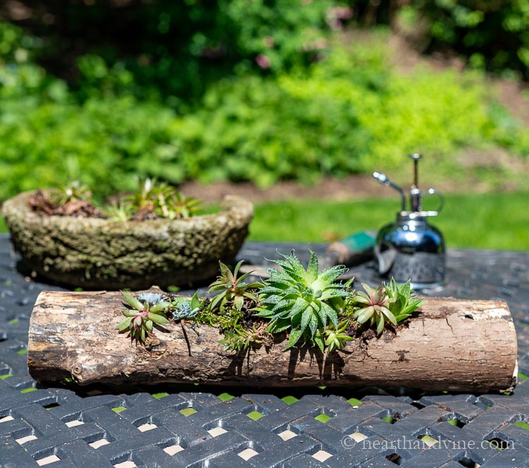 Succulent log planter on outdoor table with plant mister and old hypertufa