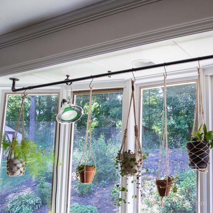 Plants hanging off pipe hanger in window
