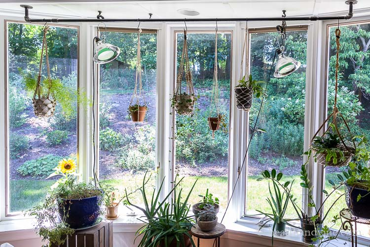 Center shot of bay window with industrial pipe assembly and lots of plants.