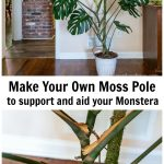 Moss pole in Monstera plant and a second image of a close up showing the aerial roots