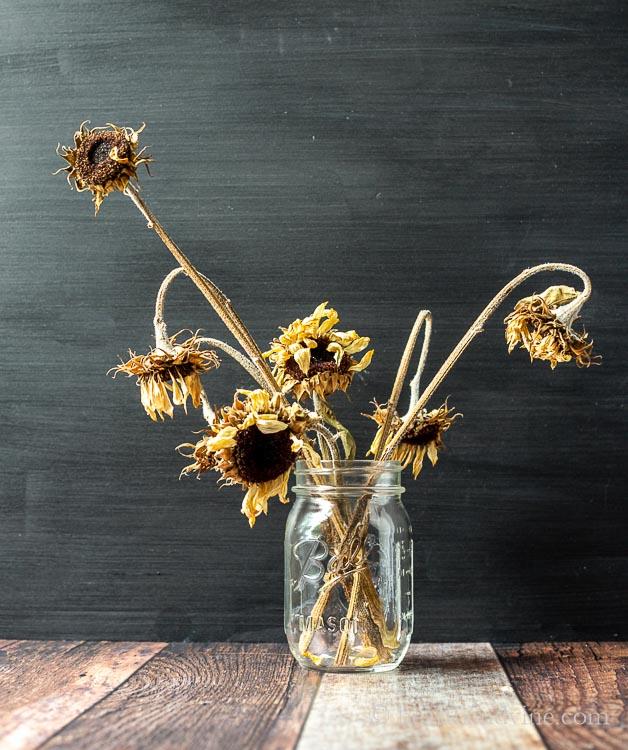 Dried sunflowers in a mason jar.