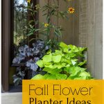 Fall planter on front porch with sweet potato vine, black heuchera and oxeye daisy