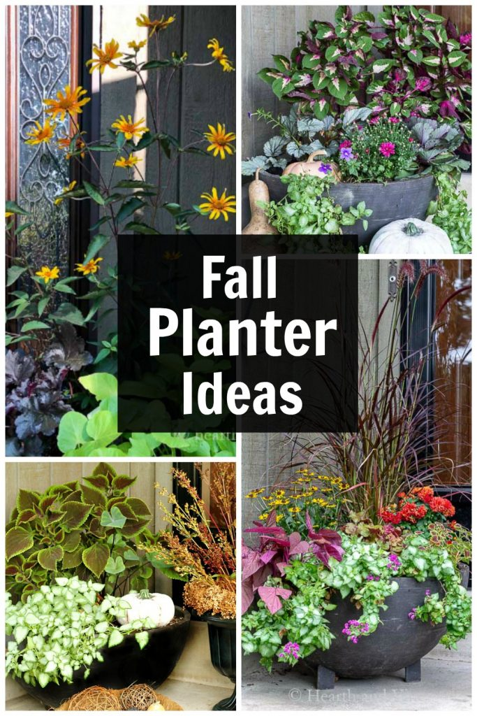 Four different fall flower container gardens in a collage.