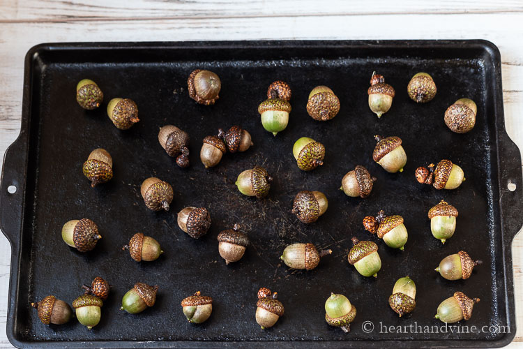 Acorns on a cookie sheet.