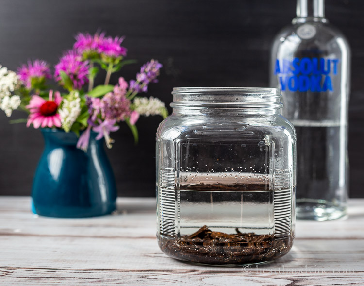 Vanilla beans and vodka in a large jar.