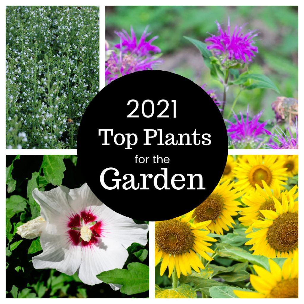 2021 plants of the year collage of flowers, beebalm, calamintha, sunflowers and rose of sharon.