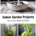 Three indoor gardening projects. A fountain, water garden and kokedama moss ball