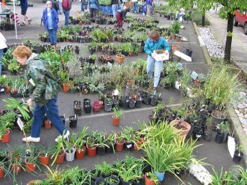 People in a plant sales with pots one the ground.