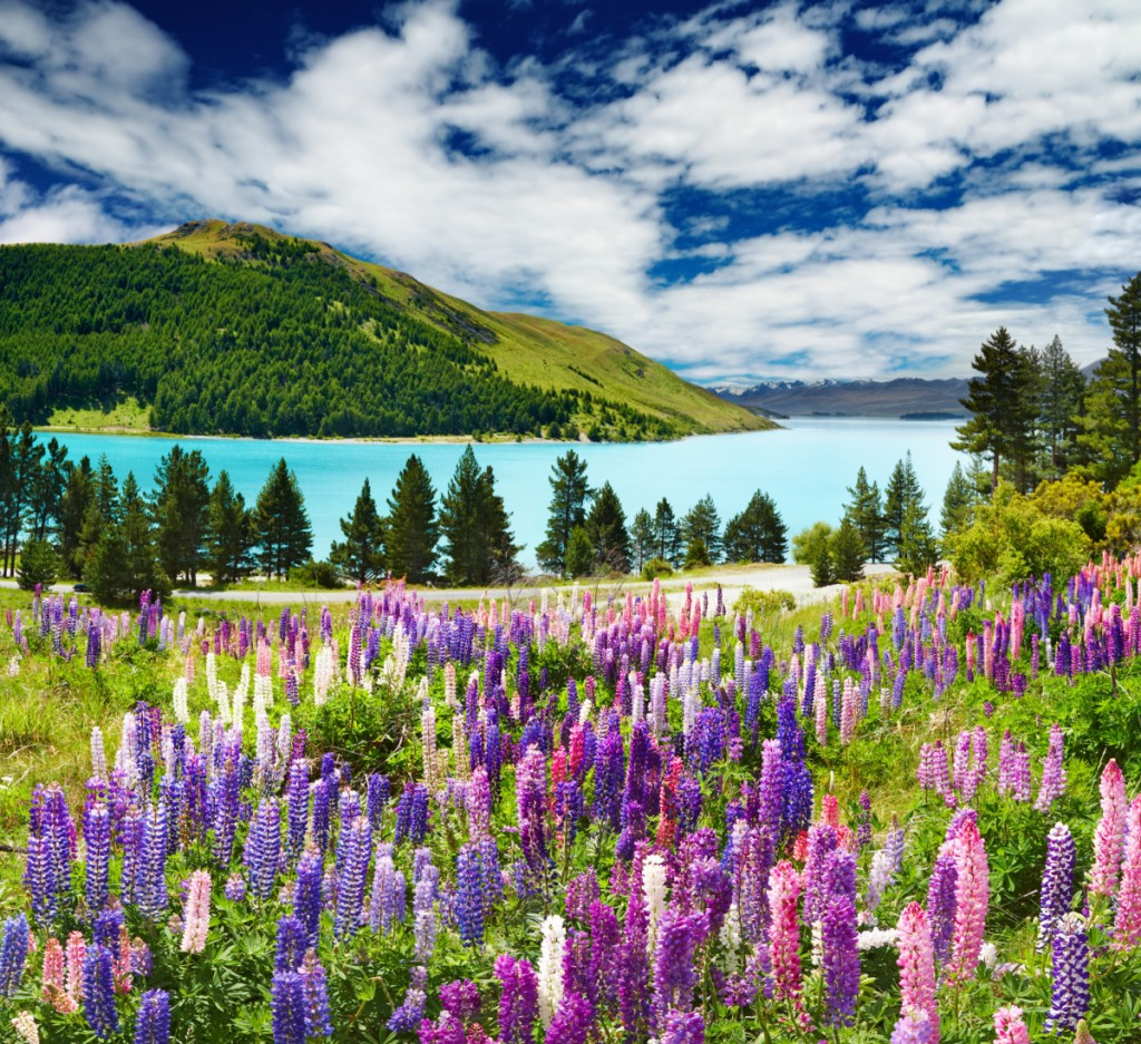 Landscape image of a lake with mountains in the background and a field of purple and pink flowers in the foreground.