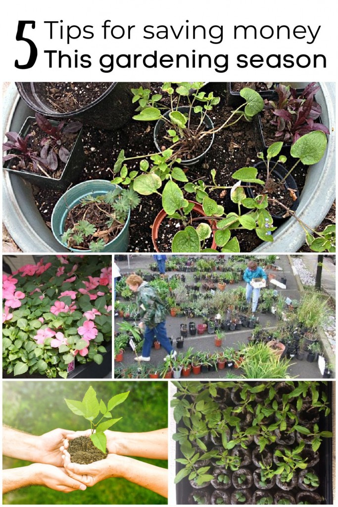 Collage of plants pictures. One of little pots, one of a flat of impatiens, one of pots in a nursery, one of seed pots and one of two hands sharing a plant.