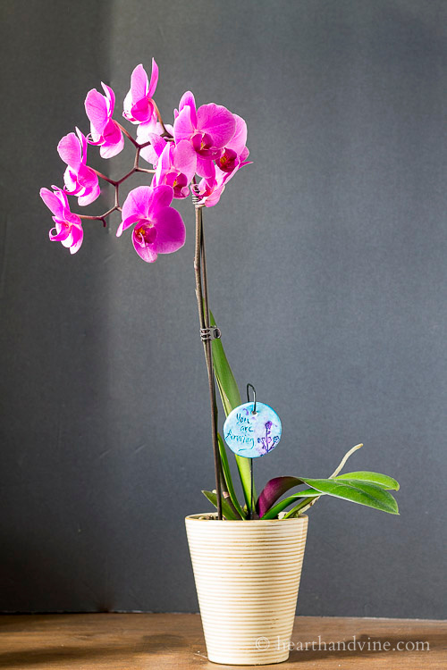 One garden charm hanging in an orchid pot.