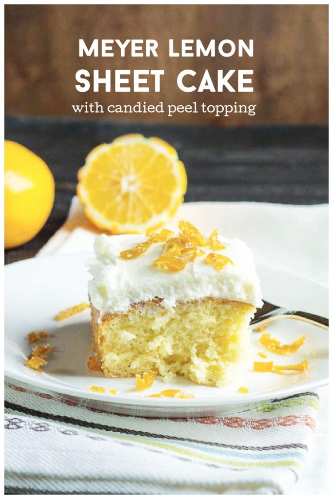 Piece of Meyer lemon sheet cake with candied peel topping.