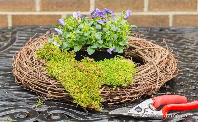 Grapevine wreath, pruner, sheet moss and viola plants.