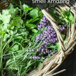 Basket with lavender and rose scented geranium leaves