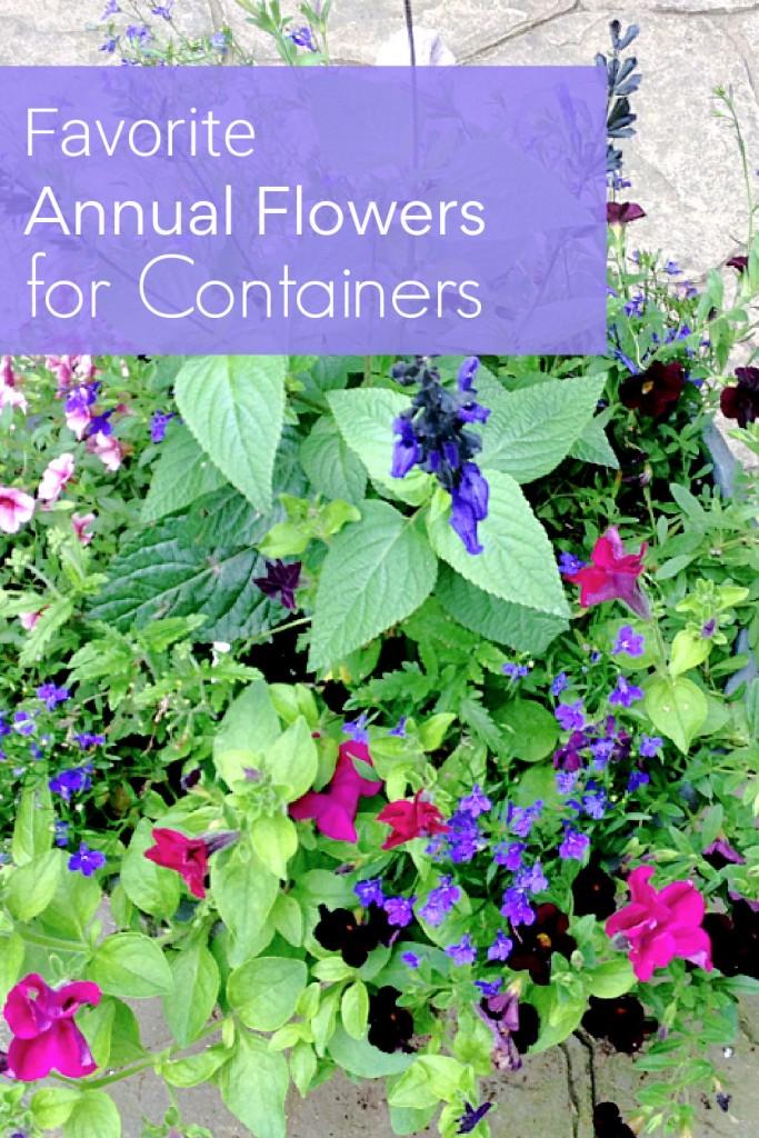 Large pot with annual flowers including blue lobelia, salvia black and blue, fuchsia petunias and dark calibrachoa.