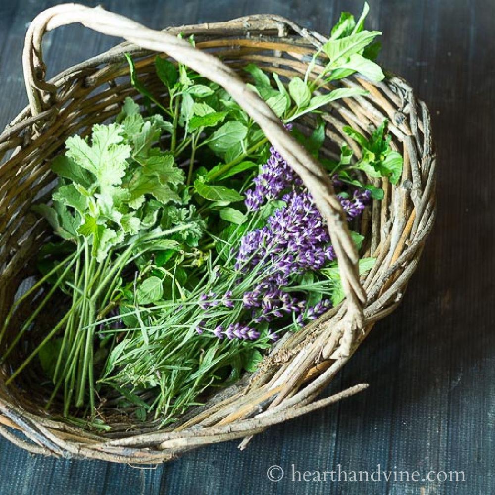 Basket with geranium leaves