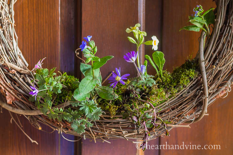Flowers planted in the bottom of a grapevine wreath.