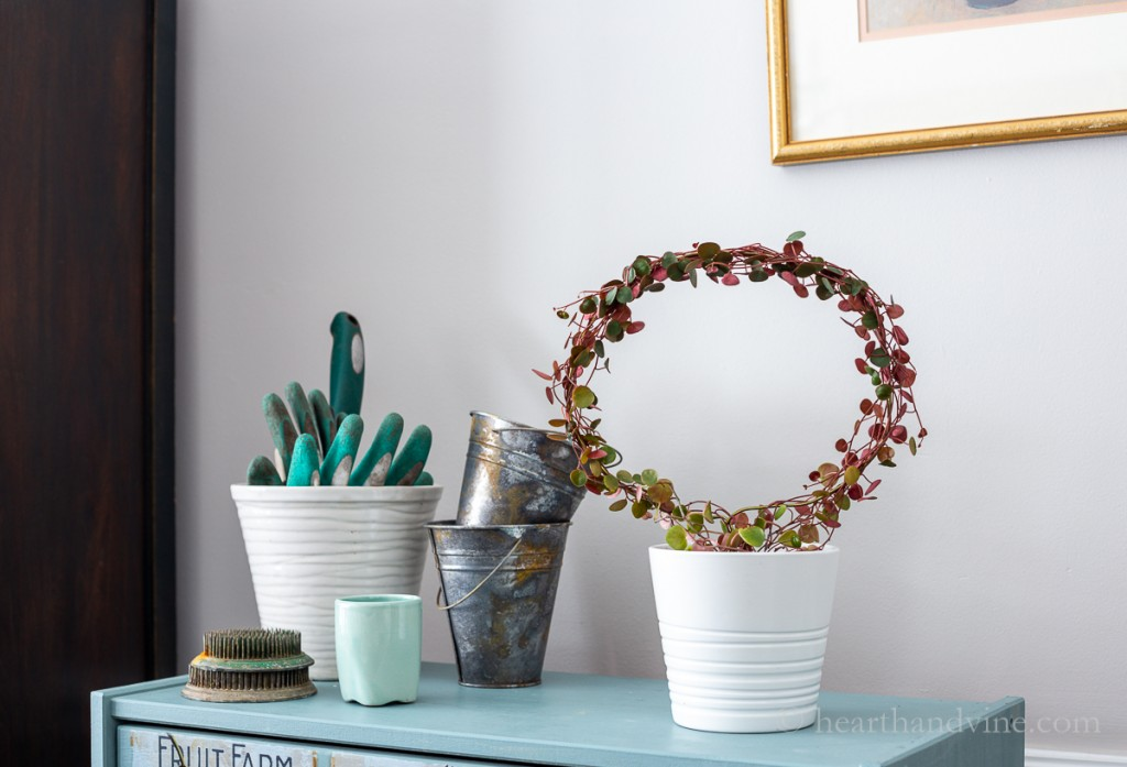 Peperomia ruby cascade round topiary on a chest next to pots.