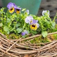 DIY Grapevine Wreath Flower Planter