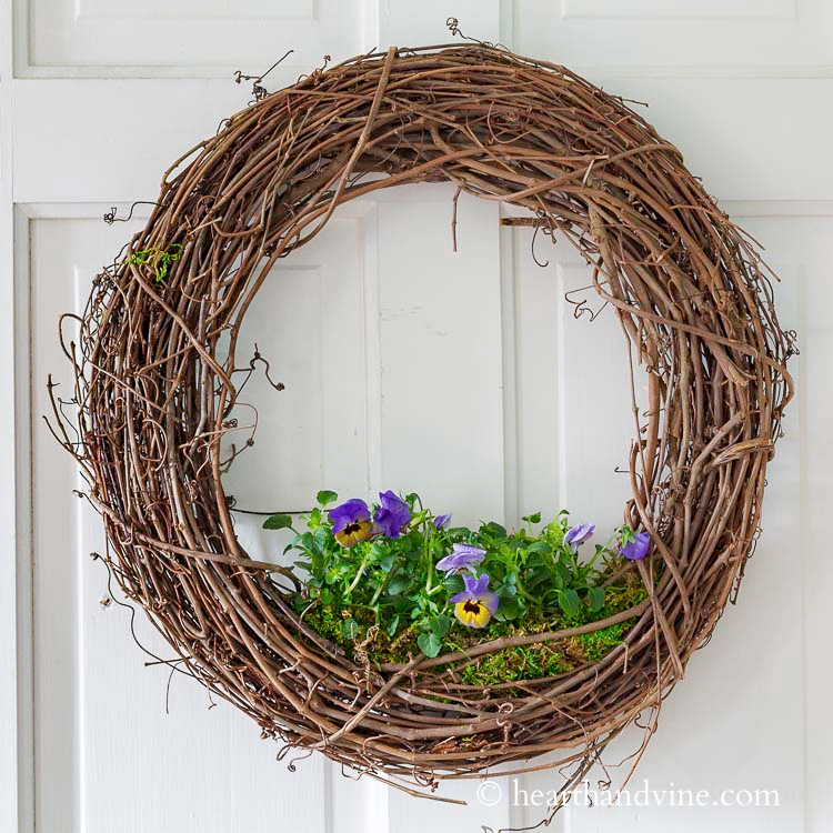 A grapevine wreath with violas growing in the bottom center hanging on a white door.