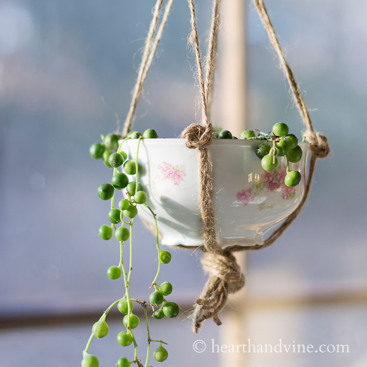 Vintage teacup hanging with string of pearls planted inside