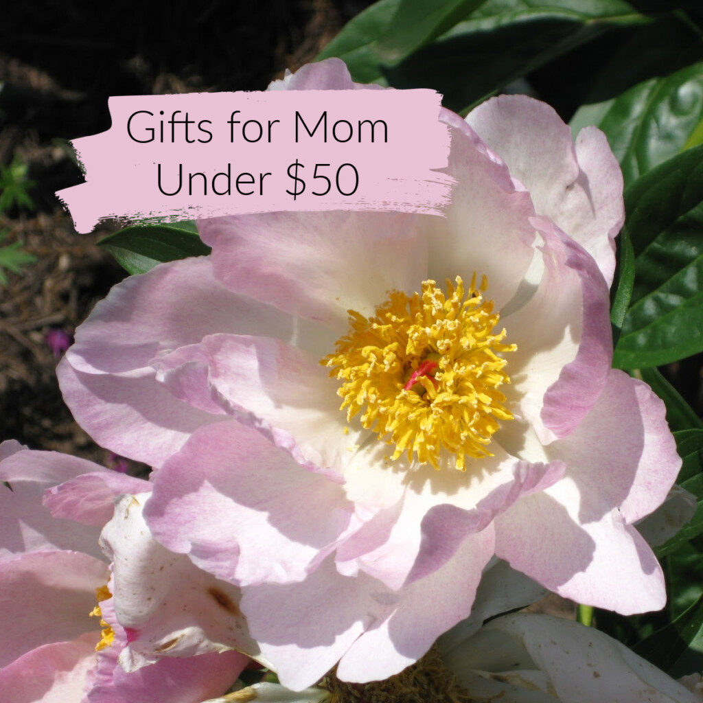 "Single peony with text overlay ""Gifts for Mom Under $50"""